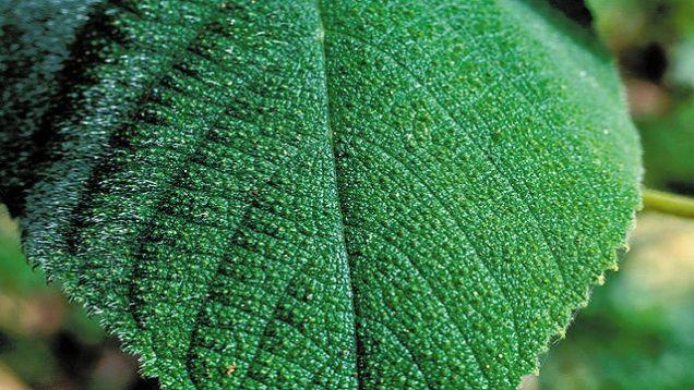 gimpy gimpy plant